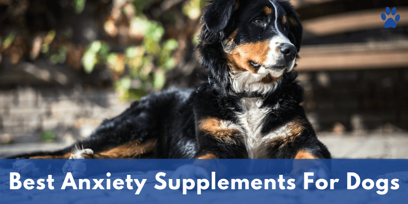 Anxiety In Dogs - Best Anxiety Supplements For Dogs - Inner Image