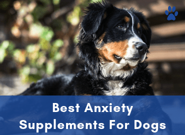 Anxiety In Dogs - Best Anxiety Supplements For Dogs Buyer Guide