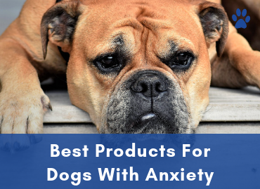 Anxiety In Dogs - Best Products For Dogs With Anxiety Buyer Guide
