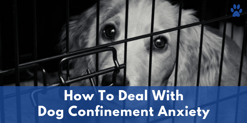 Anxiety In Dogs - How To Deal With Dog Confinement Anxiety