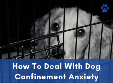 Anxiety In Dogs - How To Deal With Dog Confinement Anxiety - Post Image