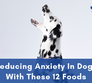 Anxiety In Dogs - Reducing Anxiety In Dogs With These 12 Foods
