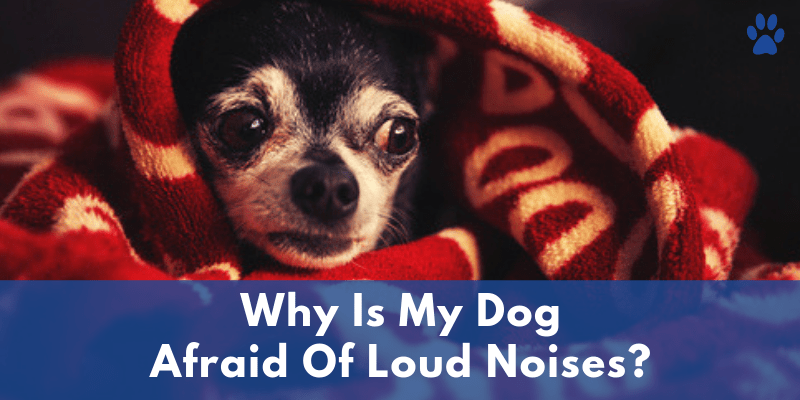 Anxiety In Dogs - Why Is My Dog Scared Of Loud Noises