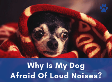 Anxiety In Dogs - Why Is My Dog Scared Of Loud Noises - Post Image