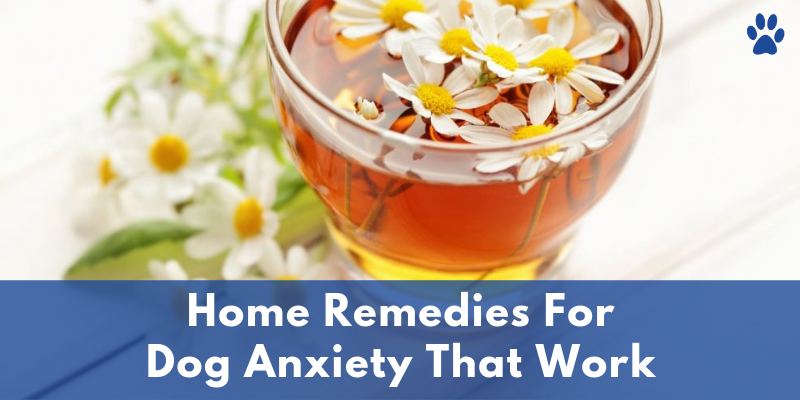 Home Remedies For Dog Anxiety That Work