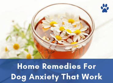 Home Remedies For Dog Anxiety That Work - Page Image