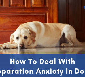 How To Deal With Separation Anxiety In Dogs - Post Image