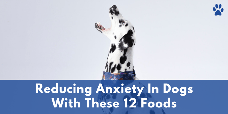 Reducing Anxiety In Dogs With These 12 Foods