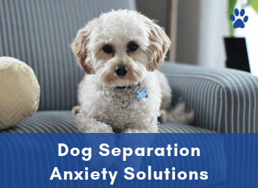 Anxiety In Dogs - Dog Separation Anxiety Solutions