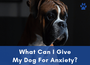 Anxiety In Dogs - What Can I Give My Dog For Anxiety - Post Image