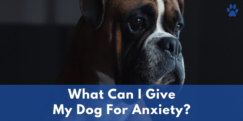 What Can I Give My Dog For Anxiety