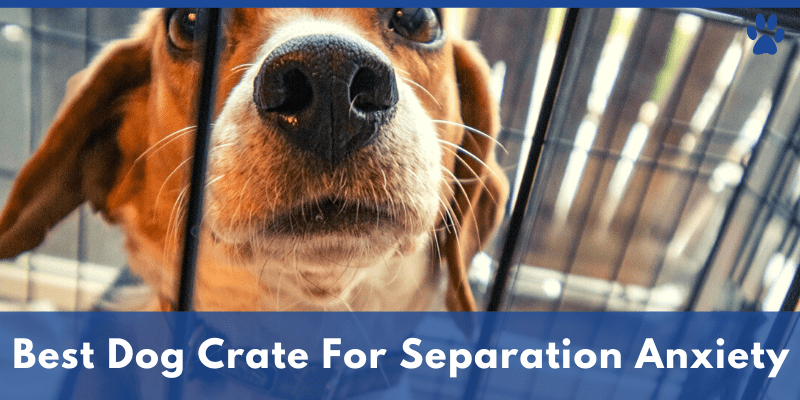 Best Dog Crate For Separation Anxiety
