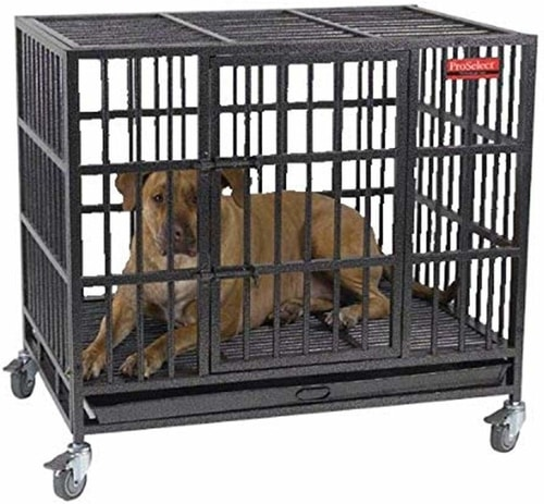 Best Dog Crate For Separation Anxiety - ProSelect Empire Dog Cage