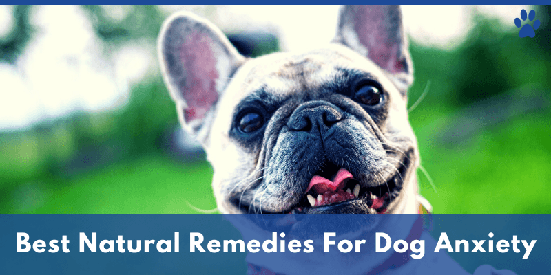 Best Natural Remedies For Dog Anxiety