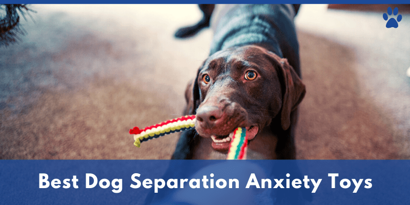 Best Dog Separation Anxiety Toys