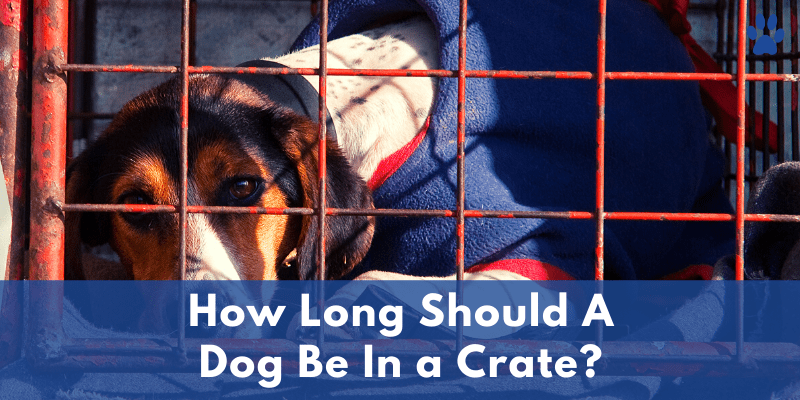 How Long Should A Dog Be In a Crate