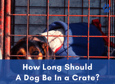 How Long Should A Dog Be In a Crate - Post Image