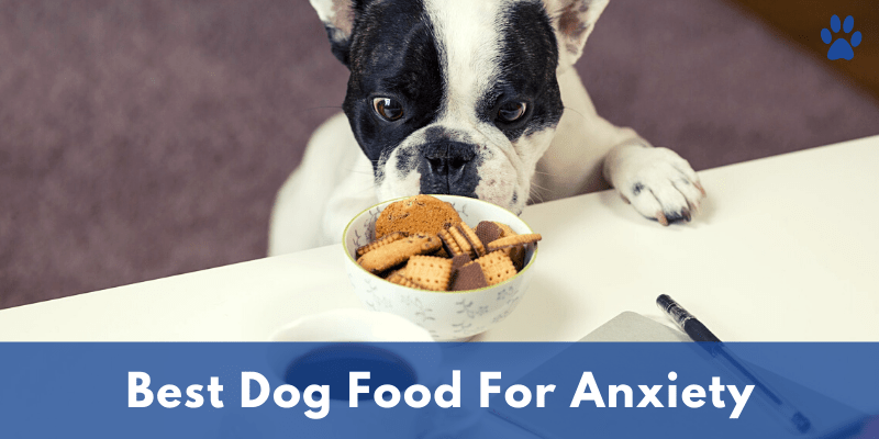 Best Dog Food For Anxiety