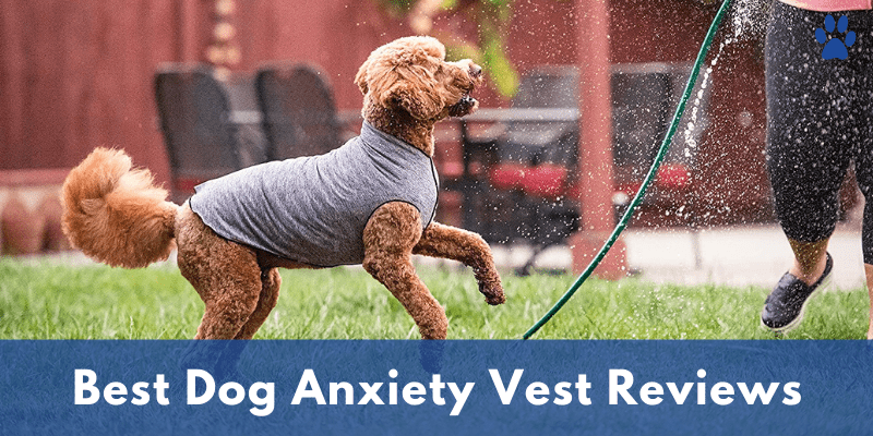 Best Dog Anxiety Vest Reviews