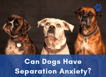 Can Dogs Have Separation Anxiety - Post Image