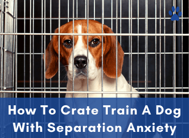 How To Crate Train A Dog With Separation Anxiety